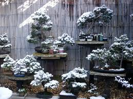 Winter Bonsai - Bonsai tree care