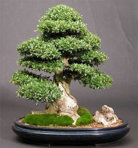 on bonsai wiring